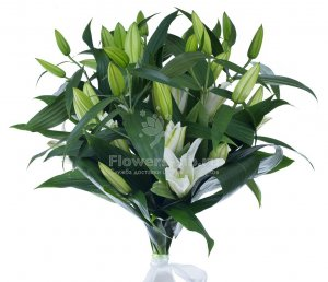 Bouquet of 7 lilies
